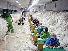 CSIRO_ScienceImage_10736_Manually_decontaminating_cotton_before_processing_at_an_Indian_spinning_mill.jpg